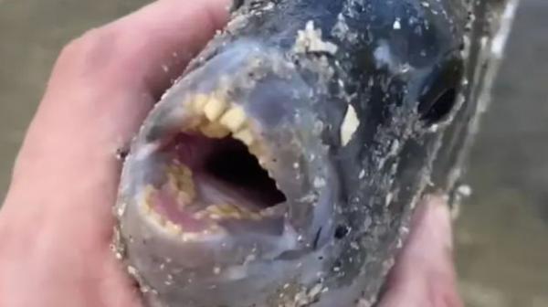 Рыбак ловил рыбу, а поймал фобию. Когда улов ухватился за крючок удочки человеческими зубами