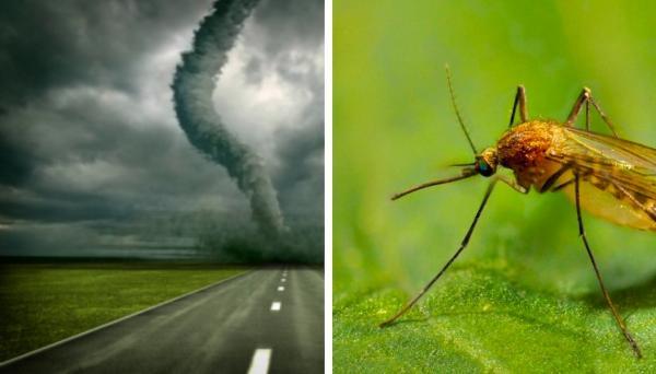 Водитель думал, что увидел торнадо, пока не подъехал ближе. Из столпа смерча на него посмотрели миллионы глаз