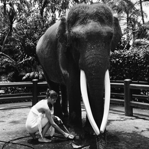 Модель Алеся Кафельникова сделала фото со слоном, но словила хейт. Люди считают, что с животным поступили