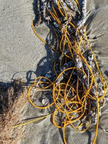 Отдыхающие приняли морских обитателей за мусор, но не стоит их обвинять. Во всём виноват стелс 100-го уровня