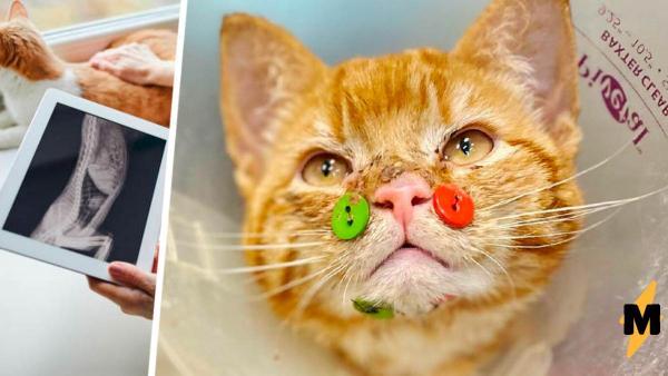 Зачем котику пуговицы на мордочке? Нет, это не кошачий пирсинг: пуговицы идут в дополнение ко швам