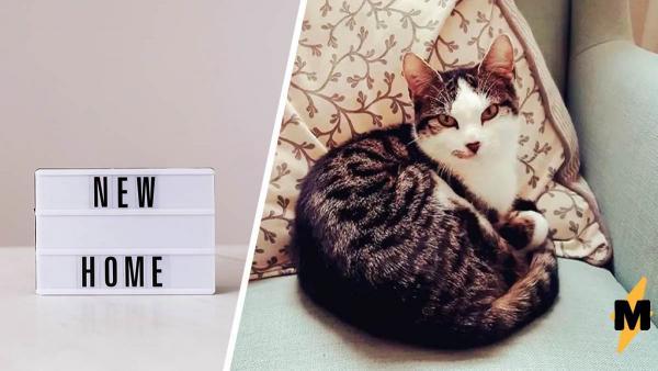 Кошатница не могла понять, откуда у неё дома четвёртый котёнок. Потом она осознала: его усыновил её кот