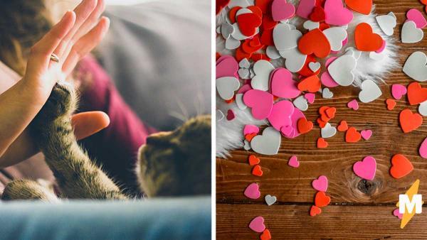 Хозяйка взяла котёнка из приюта, а получила настоящую валентинку. У него семь сердец, и ваше он тоже украдёт