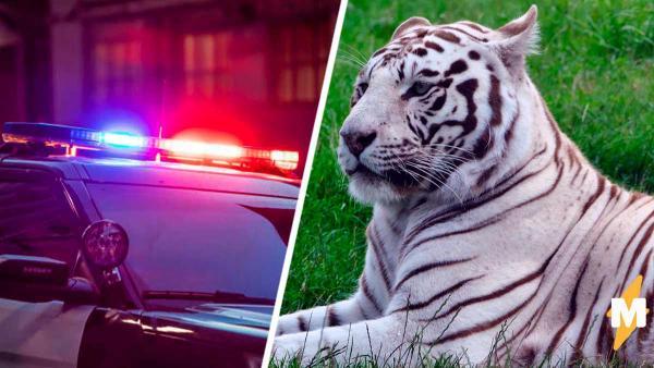 Полицейским сообщили: у дороги тигр. Сафари превратилось в фейл, когда они увидели, кто это был на самом деле