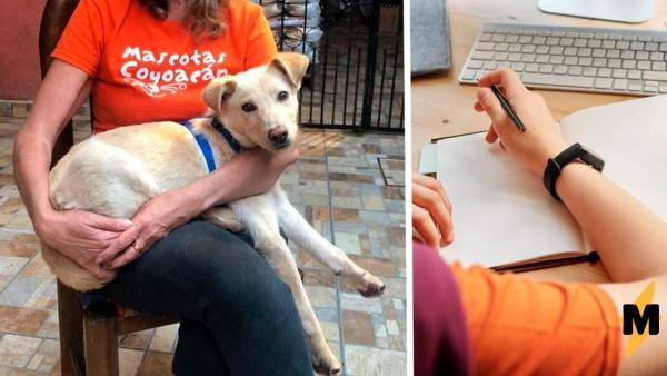 Волонтёры нашли брошенного пса, а с ним - записка. После прочитанного стало ясно: хозяин заслуживает памятник