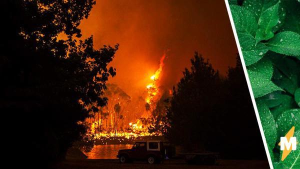 Ботаник показал, как изменился лес, уничтоженный пожаром, и это магия. Фото доказывают: природа победит людей