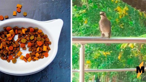 """Птица нашла способ, как получить бесплатно еду. Она стала котом, и такого """"мяу"""" вы больше нигде не услышите"""