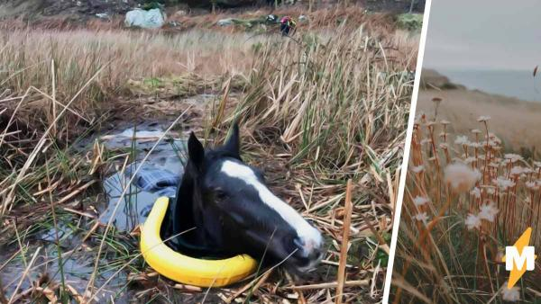 На фото не отпическая иллюзия. Это лошадка плавает в болоте, потому что захотела быть свободной лошадью