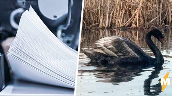 Белый лебедь почернел за одну ночь, но это не чудо природы. С ним произошло то же, что и с бумагой в принтере