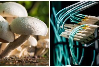 Блогер нашёл способ посмотреть сны грибов со звуком. Это натуральный рейв, но танцевать под такое не захочется