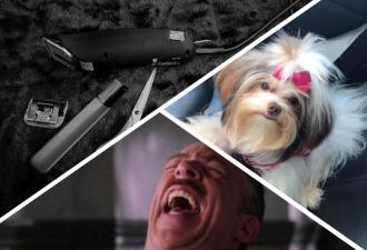Собаку постригли, и теперь это не пёс, а мем. Фрэнк Галлагер на четырёх ногах выглядел бы именно так