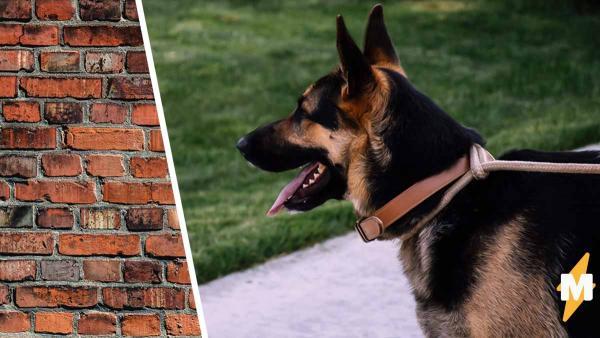 Пёсик научился ходить сквозь стены, но магия ни при чём. Виноват ракурс съемки (и ваши глаза)