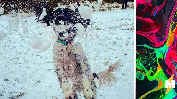 Окровавленный пёс удивил хозяев своей жизнерадостностью. Картинка страшная, а ситуация смешная