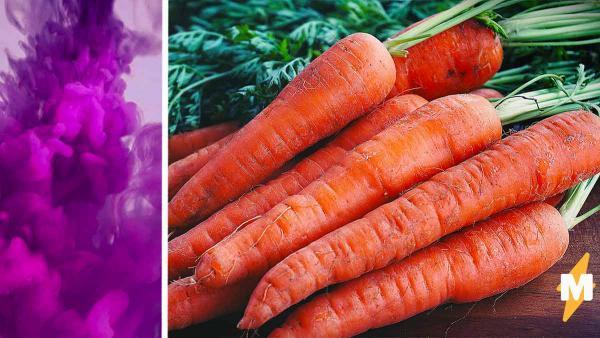 Огородник показал свой урожай, и к моркови появились вопросы. Главный из них  почему она фиолетового цвета
