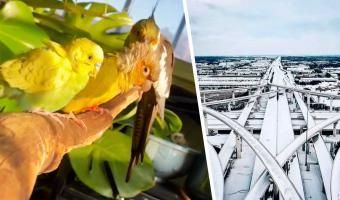 Хозяин завёл попугаев и переехал из дома в машину. Это не они его выселили, а он их спас