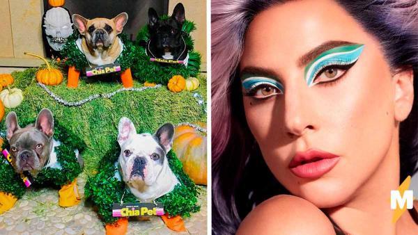 Леди Гага захотела вернуть похищенных собак, и хейтеры вошли в чат. К новости о награде у людей есть вопросы