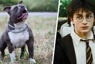 Парень показал фото собаки со шрамом, и люди поверили в магию. Ведь на снимке они видят Гарри Поттера