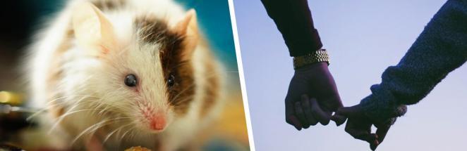 Хозяин решил сам поработать котом, чтобы поймать мышь. Реакция питомца — воплощение мема «Беды с башкой»