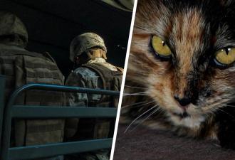Кошка из Чебоксар решила примкнуть к колонне спецтехники. Военные обнаружили пополнение только через два дня