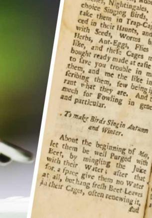 Антиквары нашли справочник садовода 1704 года, и птицы его не оценят. В нём — инструкция для пернатого караоке