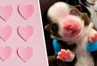 Ветеринары увидели щенка и узнали, кого не хватало в «Людях Икс». Шести лапам злодеям нечего противопоставить