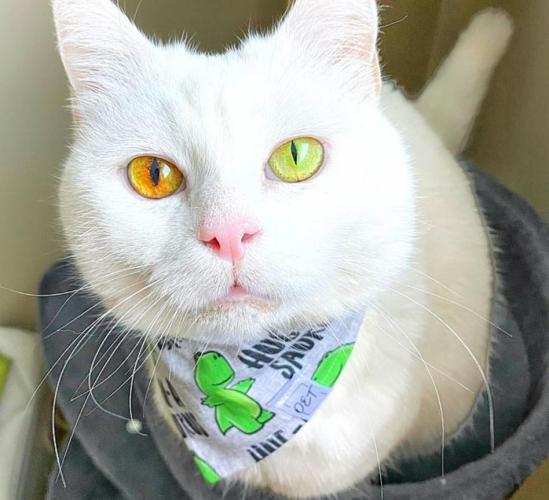 Чтобы узнать погоду, хозяйка смотрит своей кошке в глаза. Они как листья деревьев: меняются из-за температуры