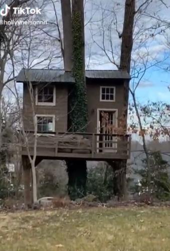 Девушка заглянула в свой заброшенный домик на дереве и не зря. Ведь у него появился хозяин,