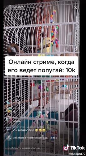 Хозяин не смог взять с собой в полёт попугая, но он нашёл выход. Теперь за птичкой наблюдают люди на стриме