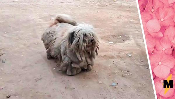 Пёс изменился до неузнаваемости благодаря прохожему и новой причёске. На фото «после» он скинул 3,5 кг шерсти