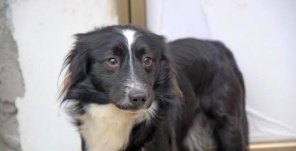 Хозяин узнал, что делает его пёс, пока он в больнице. Своим поступком питомец доказал: мы не заслужили собак