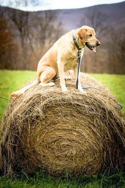 Хозяйка сфотографировала пса, но зря включила панораму. Этот монстр сделает вам больно - сведёт живот от смеха