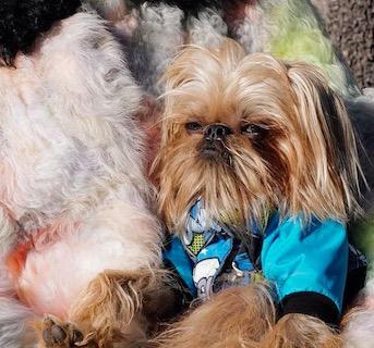 Пёс смотрит на всех с осуждением, но завоёвывает сердца людей. Выражение его морды — все мы по утрам