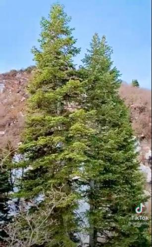 Турист посмотрел на дерево и сердечко чуть не остановилось. Он понял: его жизнь в опасности