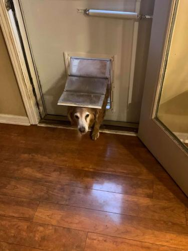 Собачка сломала систему и получает угощения, когда захочет. Хозяйка в курсе, но наказать милаху не в силах