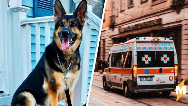 Хозяин подарил собаке новый дом, а она ему — вторую жизнь. Пёс помог сделать мужчине звонок жизни и смерти