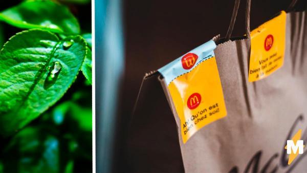 Блогер показал, во что заворачивали бургеры из «Макдоналдса» в 80-х. И люди поняли – ресторан стал экологичнее