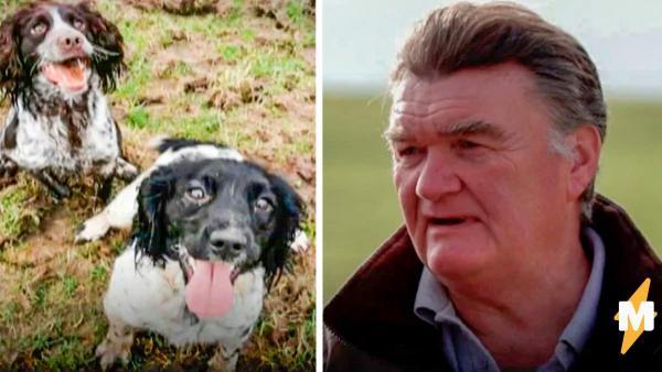 """Заводчик вышел на след похитителей и спас 70 пёсиков. Его расследование достойно стать сиквелом """"Эйса Вентуры"""""""