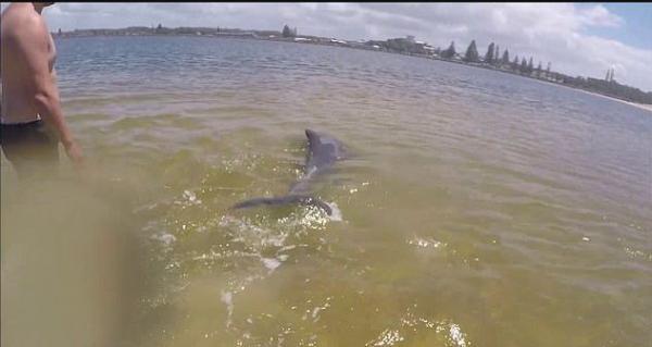 Нельзя спасать дельфинов. Рыбаки думали иначе и чуть не погубили млекопитающее своими добрыми намерениями
