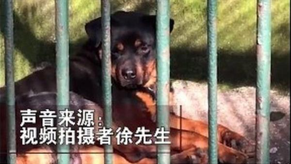 Гости зоопарка в Китае пришли в гости к волку, но в клетке сидел другой зверь. И он явно не выступает в цирке