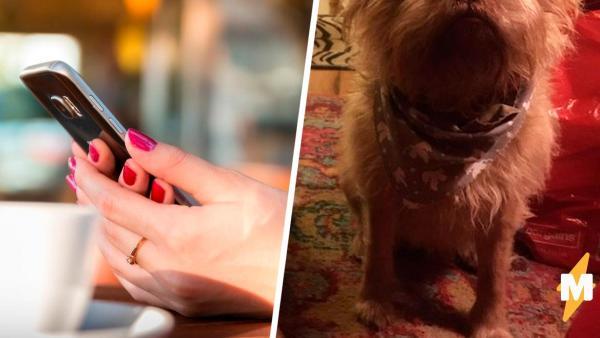 Пёс пугает владельцем своим человеческим лицом (да-да). Лёха снова застрял в собаке - и теперь это не шутка