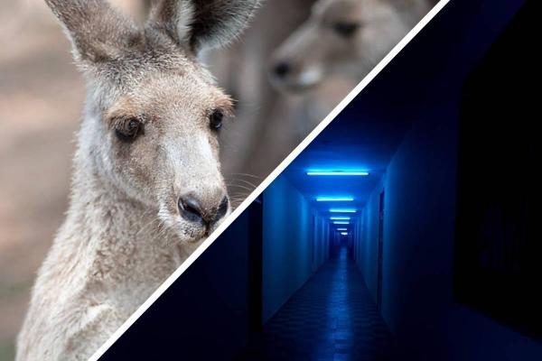 Женщина показала, как кенгуру ходит на четырёх лапах и испугала людей. Вот кто теперь главный герой ужастиков
