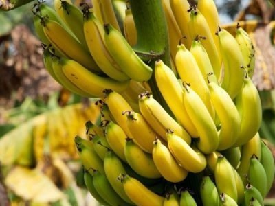 Почему вкус банановых сладостей не похож на оригинал? Блогер объяснил, и после его слов жизнь не будет прежней