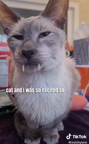 Хозяйка боится встретить кота Сабера ночью, и это понятно. Он косплей на Дракулу, моржа и мамонта в одном лице