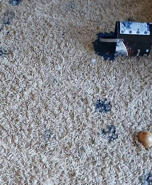 Пара взяла щенка, но он оказался не тем, за кого себя выдавал. Пёс-Джаггернаут начал покорение мира с их дома