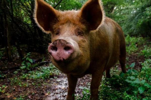 """Пара позволила животным возглавить ферму, и итог был неожиданным. """"Скотный двор"""" Оруэлла - это ещё цветочки"""