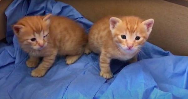 Врачи увидели на пороге больницы кошку, которую подкармливали. Она принесла им пациента - больного котёнка