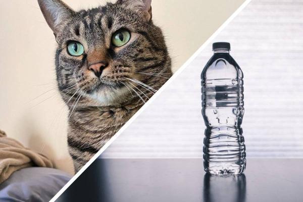 Хозяйка показала, как выбрать лучшую воду из бутылок правильно. Её кот-гурман в этом деле отличный дегустатор