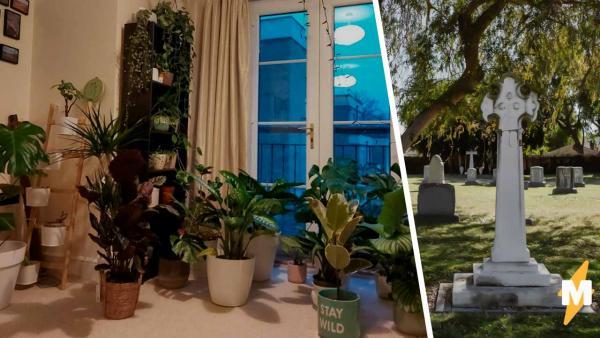 Сад в квартире врача радует глаз, если не знать историю его появления. Ведь после неё несомненно пойдут слёзы