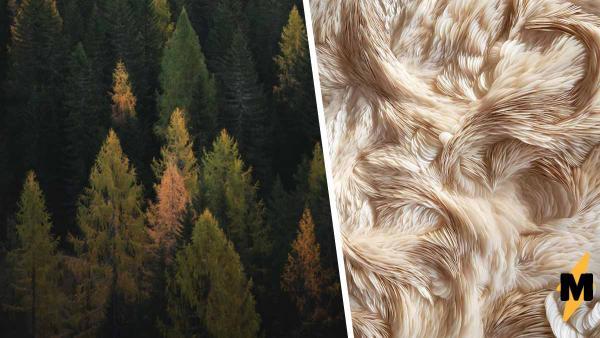 В Австралии нашли дерево, пушистость которого поражает. Но причины подобной аномалии — не для впечатлительных