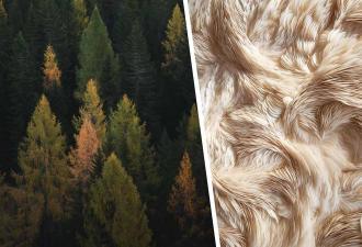 В Австралии нашли шерстяное дерево, которое двигается. Но разгадка этой аномалии – не для впечатлительных